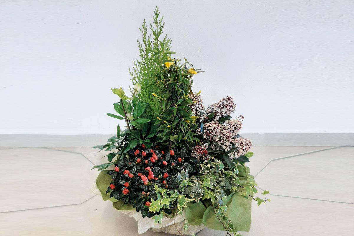 composizione-piante-dal-santo